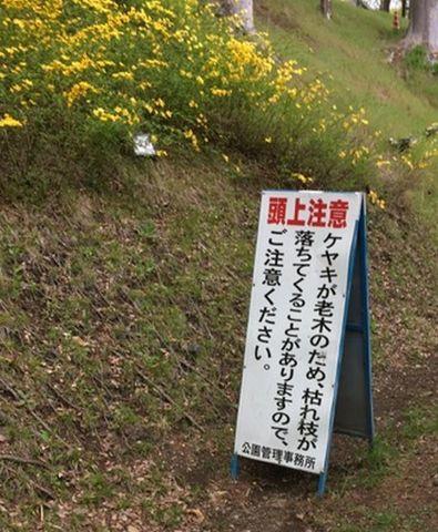 003-spring2019.jpg