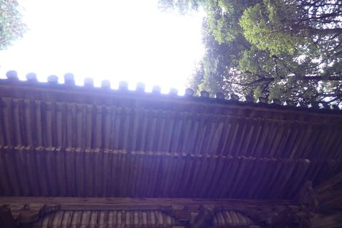 hyogo-shiga_2020nov-02-43.jpg