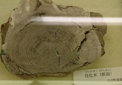 minokamo_city_museum-2021march-029.JPG