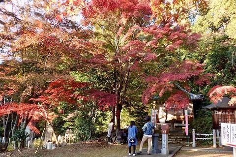 mt-tsugao_14nov2020-026.jpg