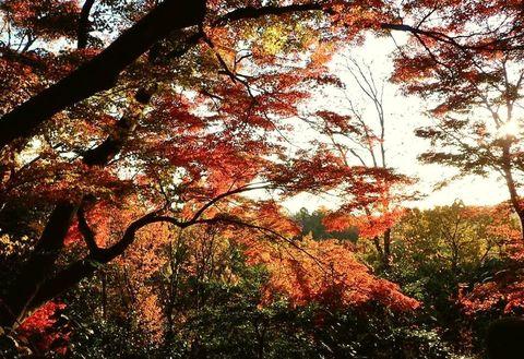 mt-tsugao_14nov2020-029.jpg