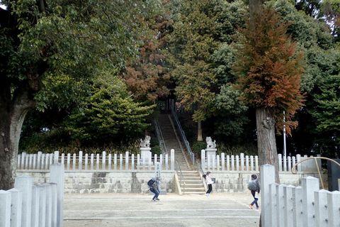 shidami-2021feb-52.JPG